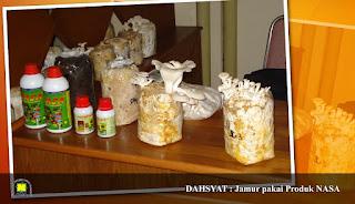 memperbanyak panen jamur, mepercepat masa panen