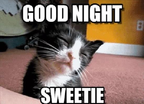 Funny Good Night Cat Photos & Memes