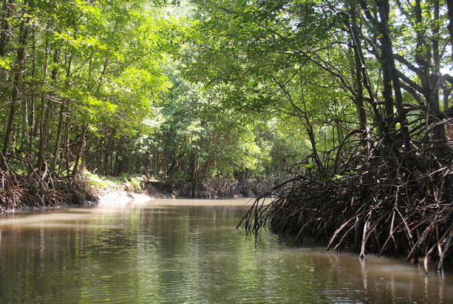 Eco tour to Can Gio mangrove forest from Ho Chi Minh City