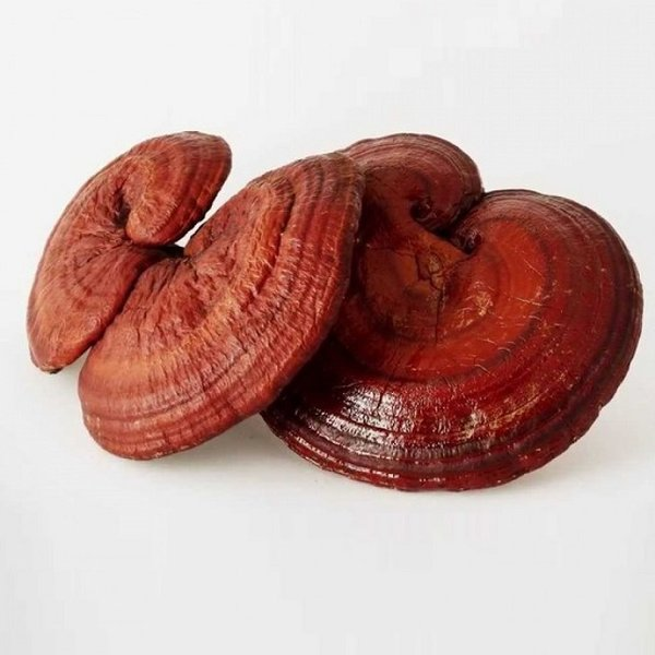 nấm linh chi Hàn Quốc nhập khẩu