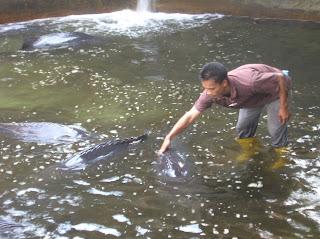 Prospek Budidaya Ikan Kerapu Di Air Payau Aquaculture Information