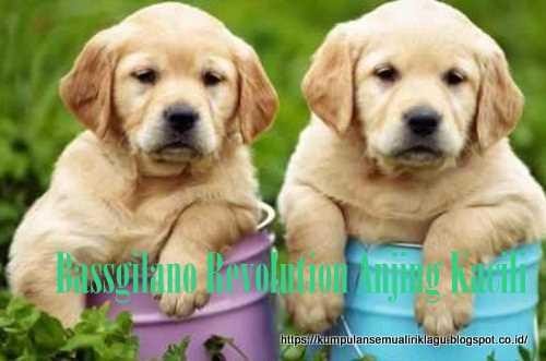 Bassgilano Revolution Anjing Kacili