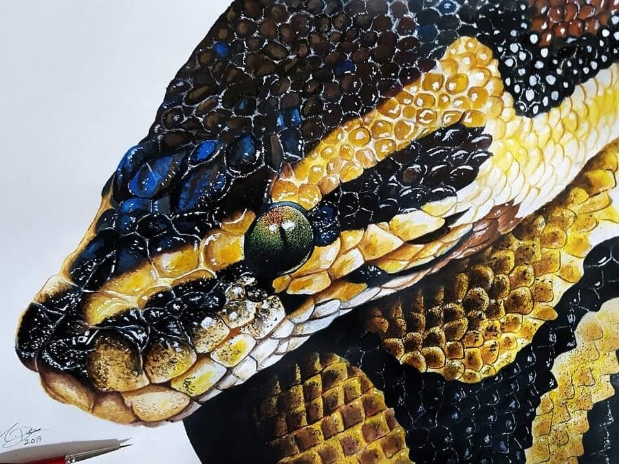 10-Ball-Python-Kyle-Duca-Animal-Paintings-www-designstack-co