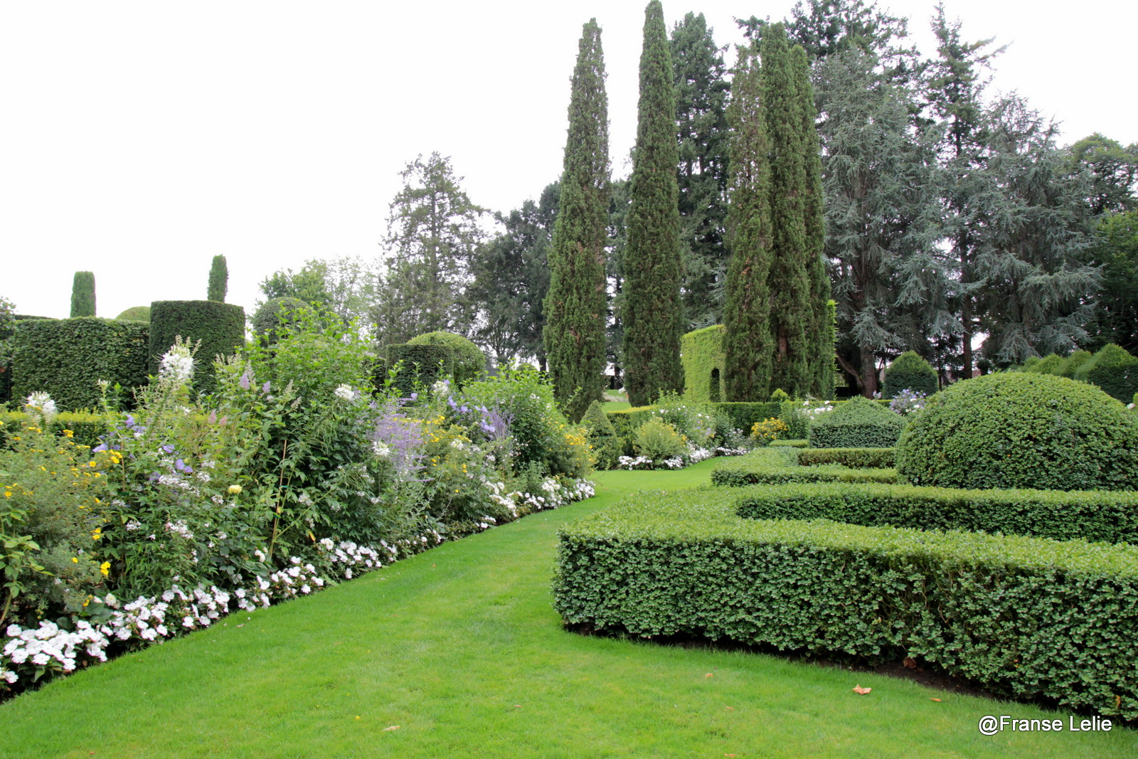 Franse lelie wat een tuin for Franse tuin