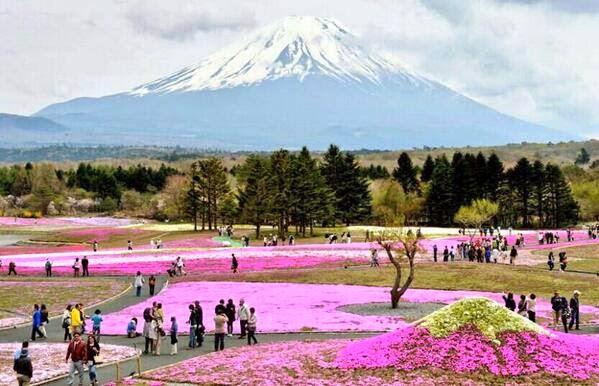 زوار في حديقة زهور خلال مهرجان شوبيزكرا فوجي عند سفح جبل فوجي في اليابان !!
