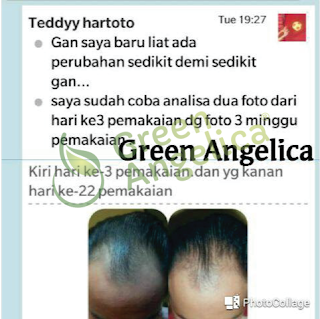 review green angelica