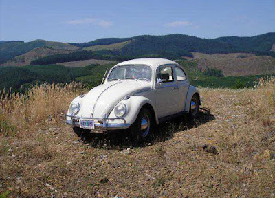 1964 Vw Bug For Sale Buy Classic Volks