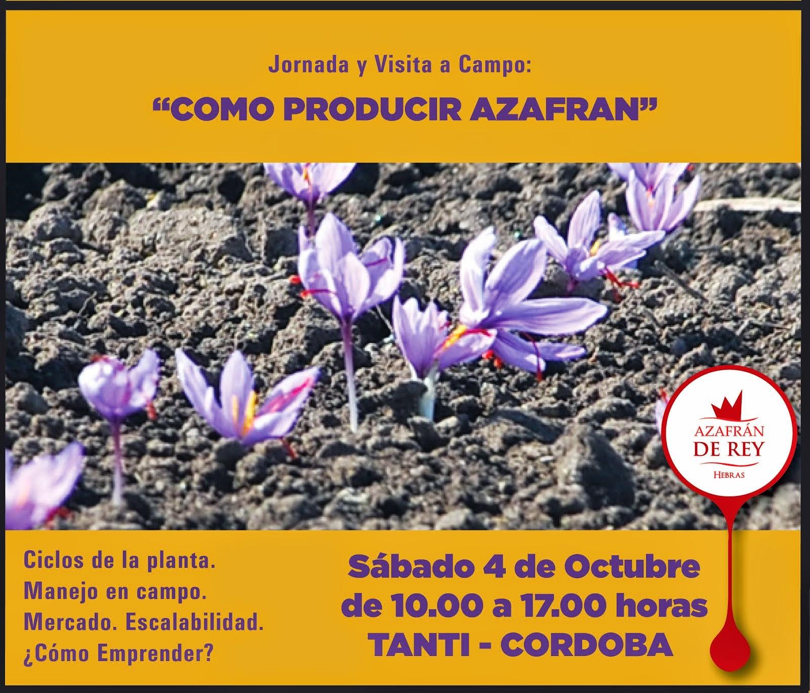 Azafran En Chile El Cultivo - Cultivo-azafran