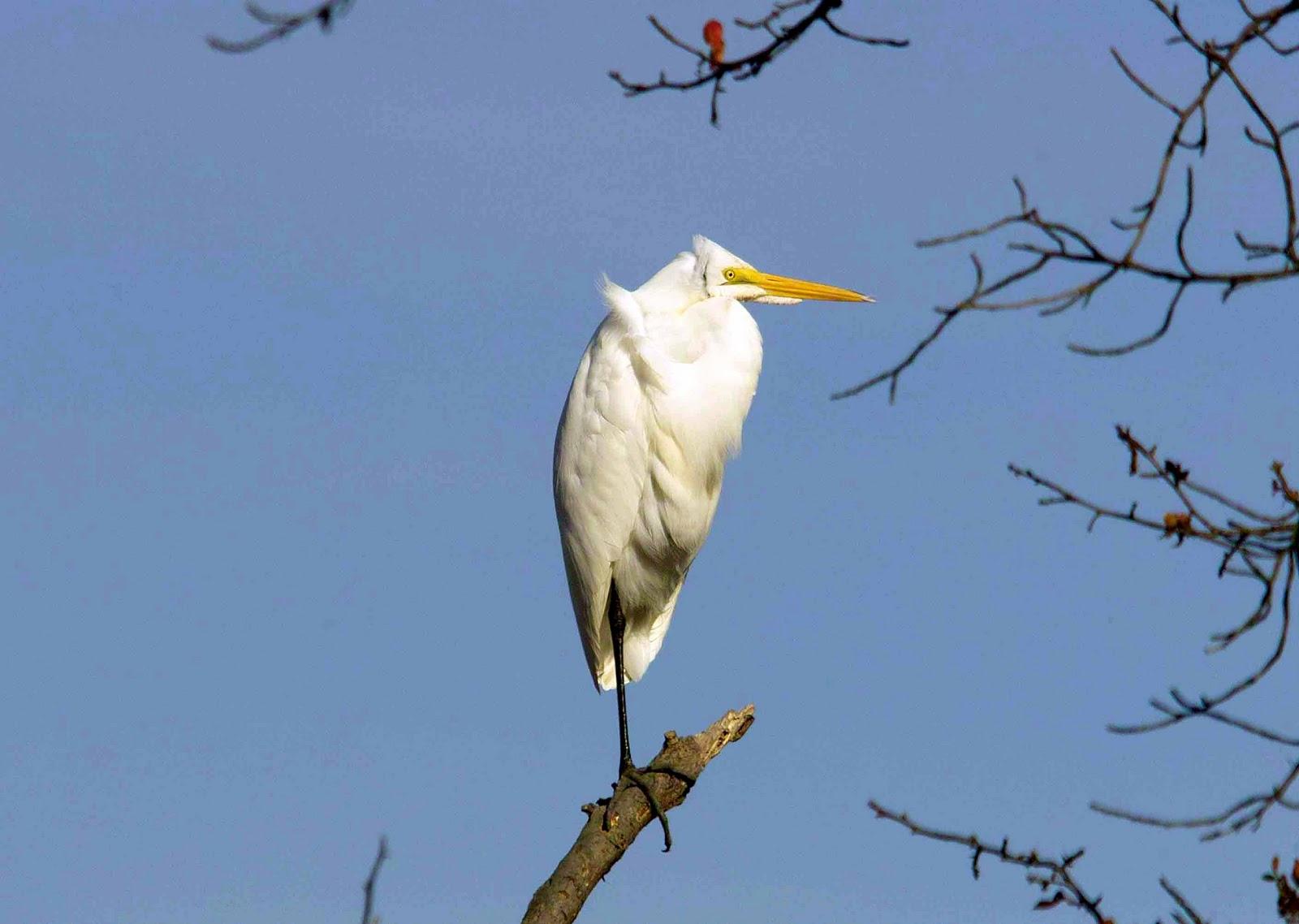 Derek Bird Brain: Searching for Egrets