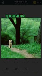 тропинка на которой стоит кошка вдалеке