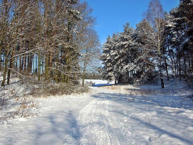 zimowa sceneria, drzewa, mróz, przyroda