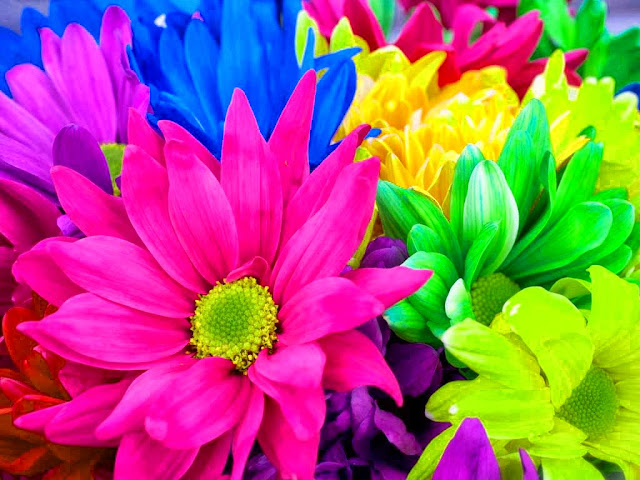 Rainbow Flowers Wallpapers Free Download