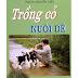 Trồng cỏ nuôi dê - PGS.TS Nguyễn Thiện