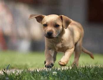 Kisah Inspiratif:Anjing Kecil