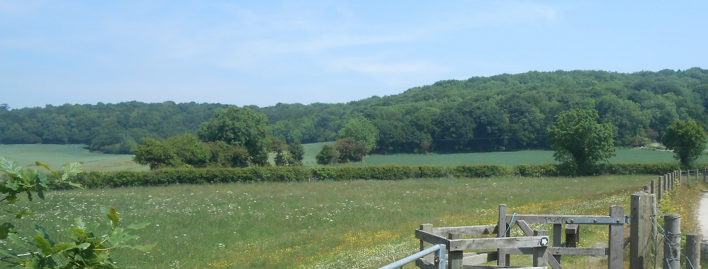 Old denaby nature reserve