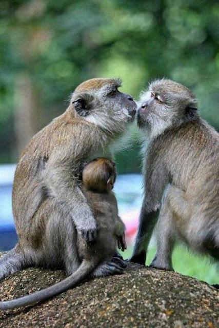 Adorable Animals Kissing Amazing Creatures