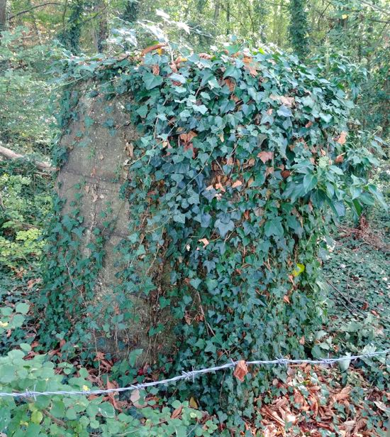The tank trap in the woods at the junction of Swanley Bar Lane and the Great North Road Image by the North Mymms History Project released under Creative Commons BY-NC-SA 4.0