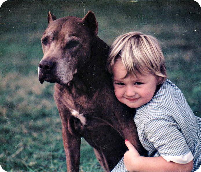 Adopting a rescued senior pitbull