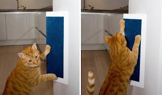 solusi kucing mencakar