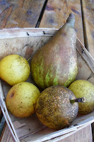 Basket of Asian and Rescue pears