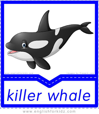 Killer whale - printable Arctic animals flashcards for English learners
