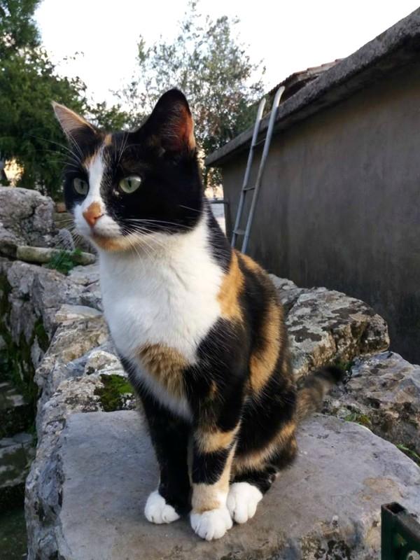 kotor street cats