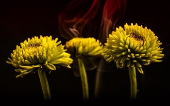 Wallpaper: Smoke and Flowers