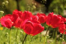 flower-722791__180.jpg