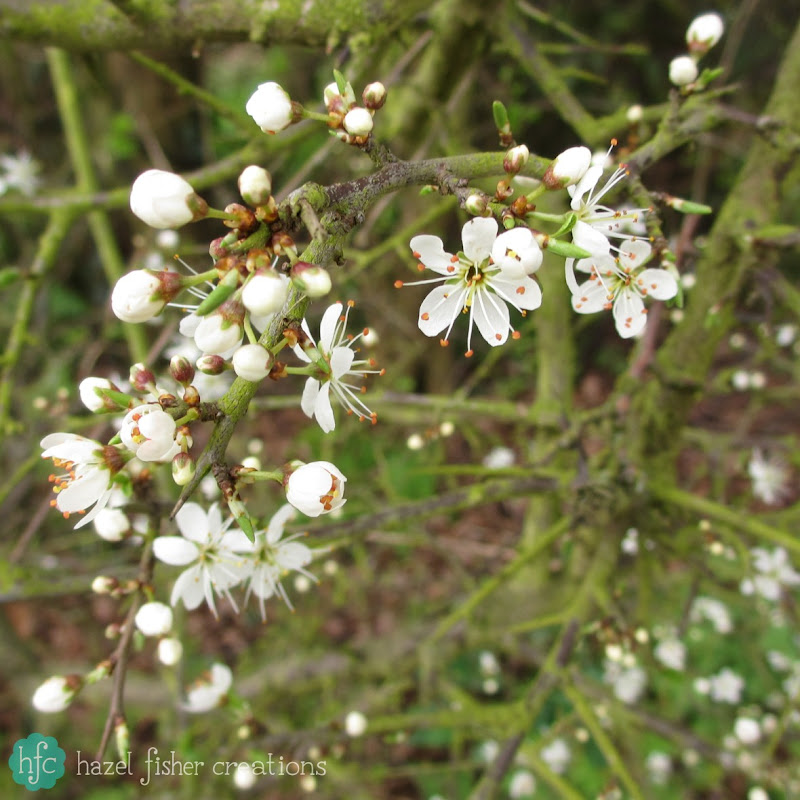 Things I Love About Spring, blossom -hazelfishercreations