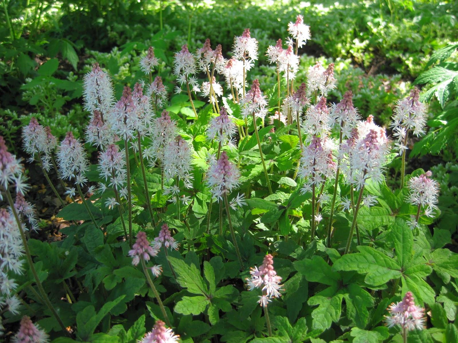 Rotary Botanical Gardens Hort Blog March 2014