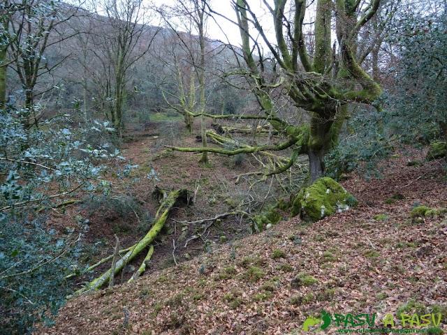 Ruta al Pico Gobia y La Forquita: Parte alta de la Biescona