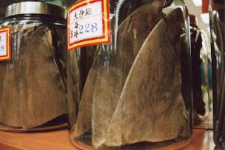 shark fins in jars