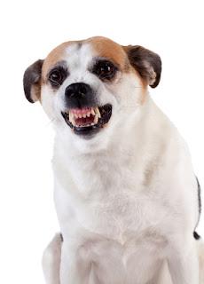Gazy pieprzowe na psy