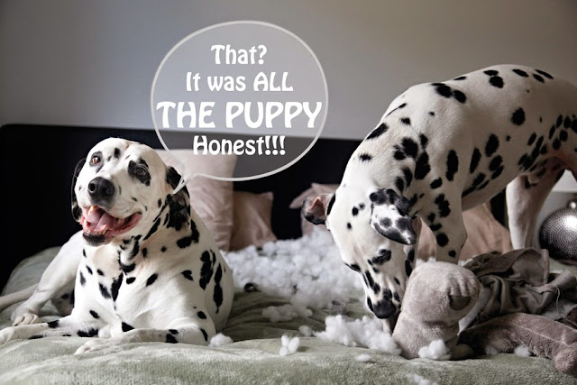 Welcome to Dalmatian DIY! 🐾 Homemade dog treat recipes, DIY dog toys, pet-related crafts, free printables, and other goodies for furkids and their humans.