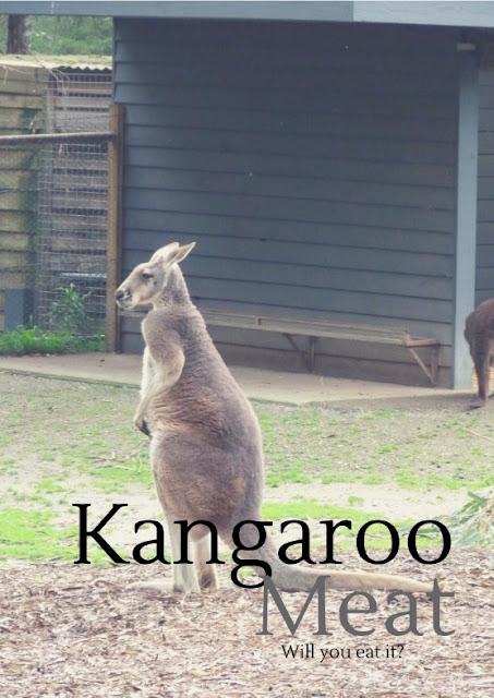 kangaroo-wild