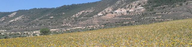 Campos de flores de La Alcarria
