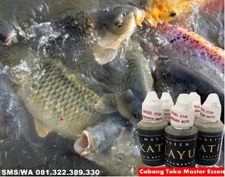 Umpan Untuk Ikan Mas Kilo Gebrus Master Essen Katilayu
