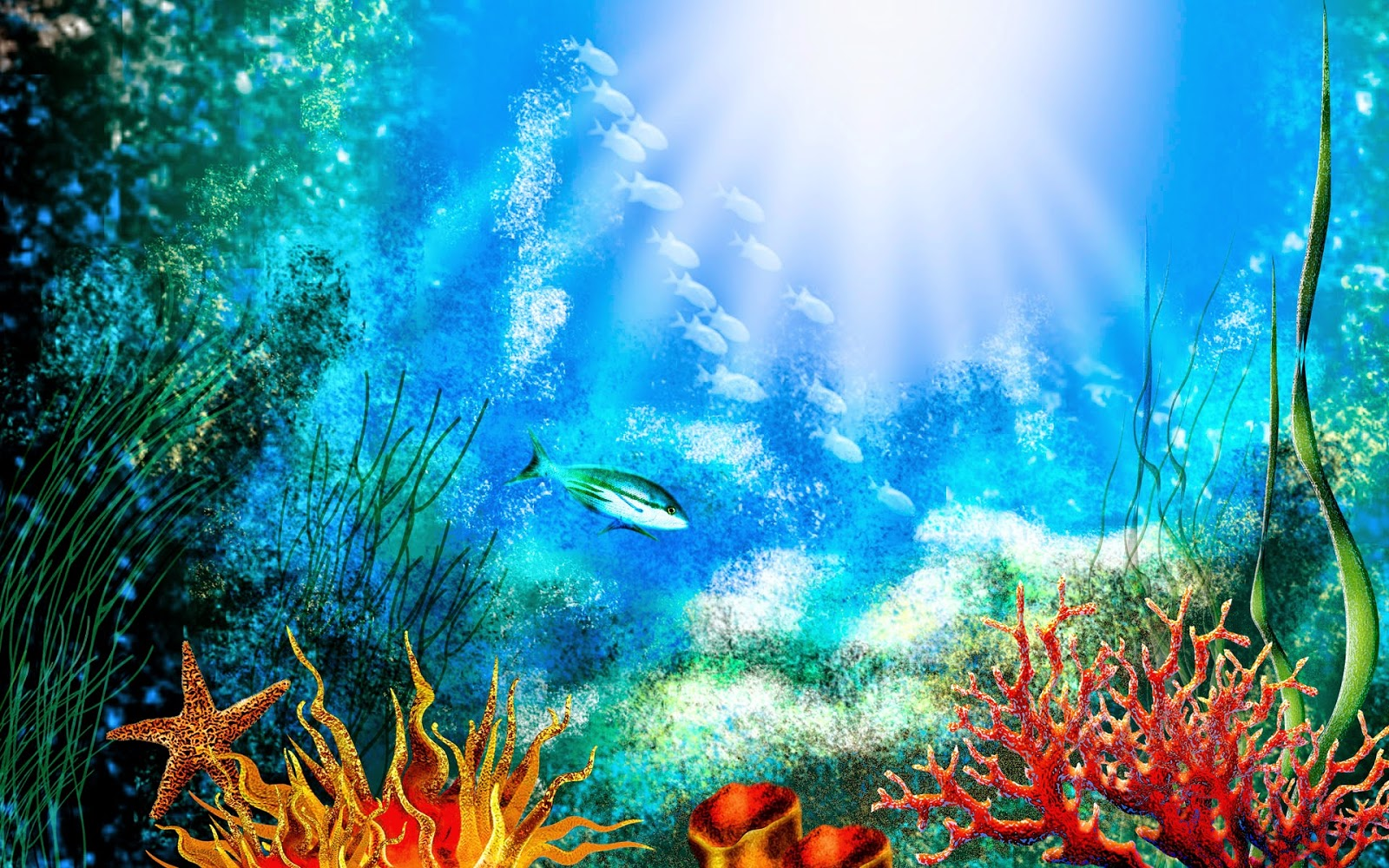Coral reef pictures hd