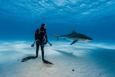 Shark - Foto Terbaik tahun 2016 national geographic