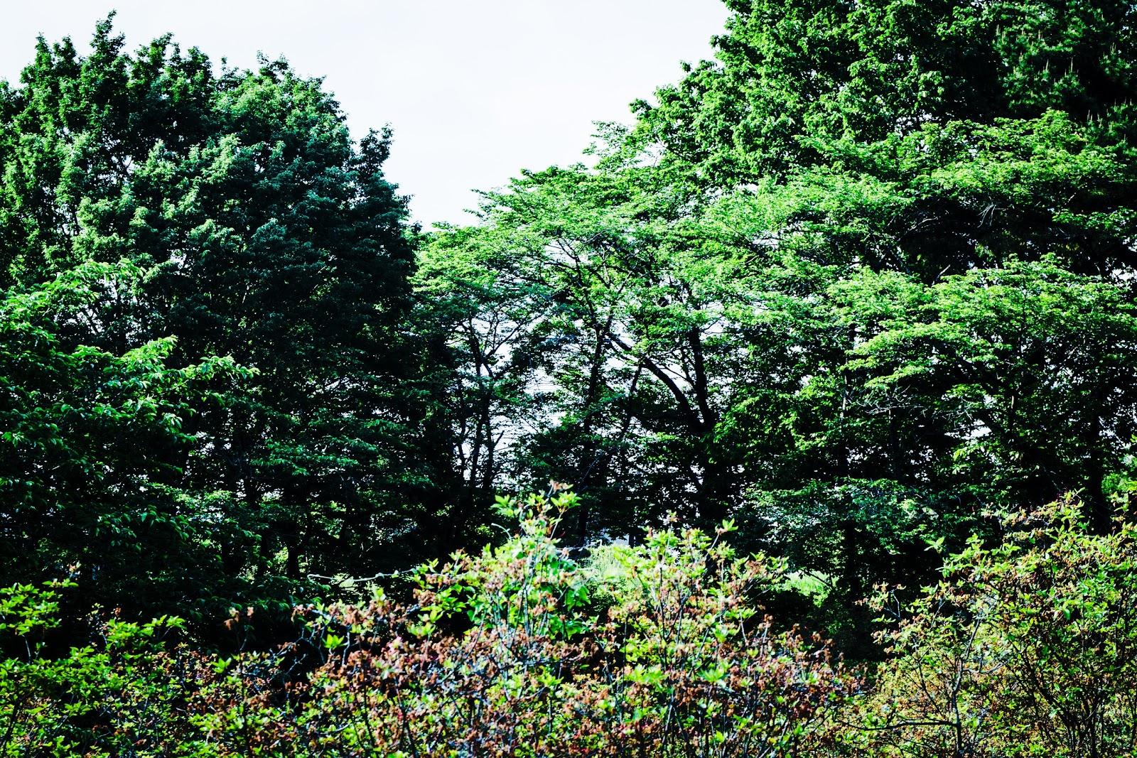公園の晴れた森の木々