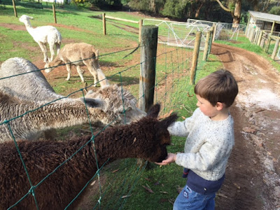 Pentland Alpaca Stud and Animal Farm