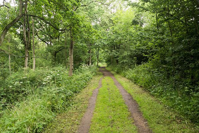 North Bucks Way as it goes through Oakhill Wood