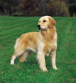 Little Story Jenis Jenis Anjing Ras Karakteristiknya Part 1