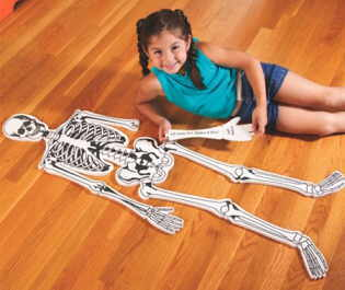 Tips For Teaching Young Children The Skeletal System The