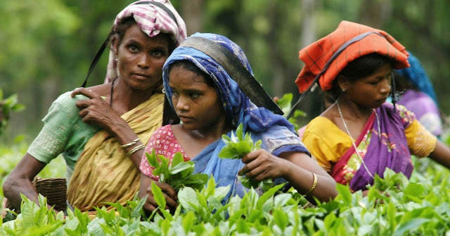 Tea garden worker demands Minimum Wage Act