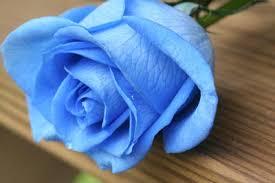 Arti & Makna Bunga Mawar