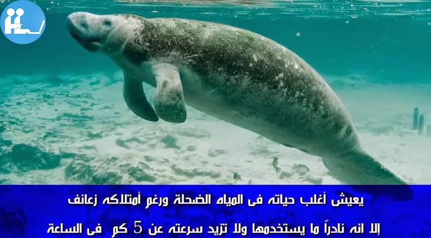 أبطأ الحيوانات في العالم.