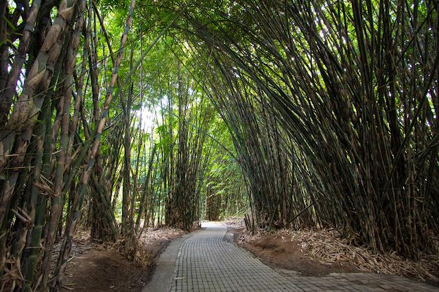 Foresta di bambù-Villaggio tradizionale di Penglipuran-Bali