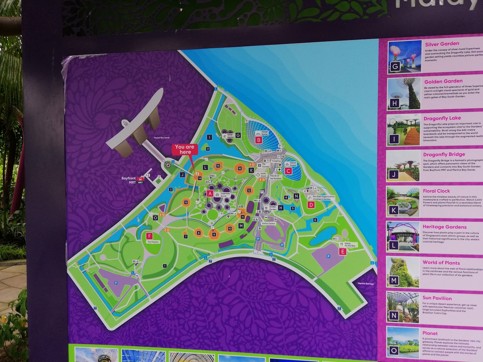 we visited the gardens by the bay which occupies 100 hectares all on reclaimed land