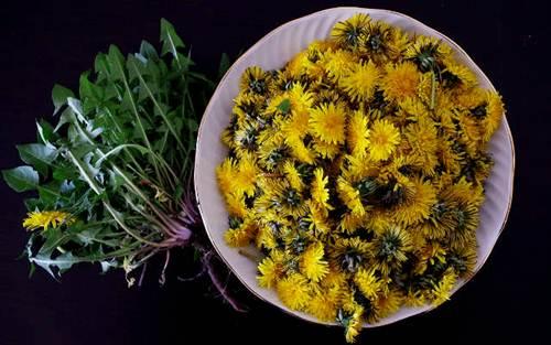 tanaman herbal untuk menurunkan berat badan dengan cepat